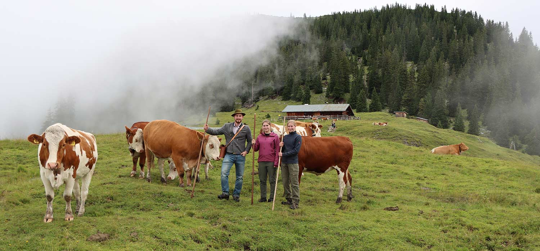 Kühe Ferlhof Krün Urlaub auf dem Bauernhof
